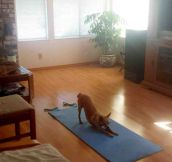 Don't Disturb Yoga Dog