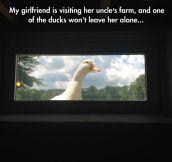 Stalker Duck