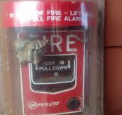 Fire Could Also Be The Solution Here