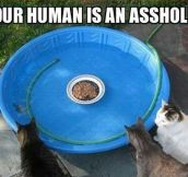 Hunger Games: Cat Version