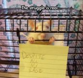 I'm Still Just A Rat In A Cage