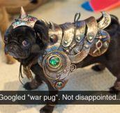 War Pug