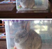 Angry Rabbit
