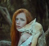 Red And Fox