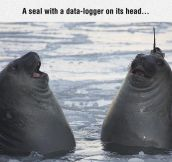 The Goofiest Seals You've Ever Seen