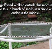 Snail Ritual