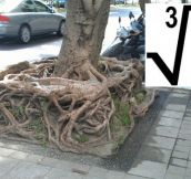 Square Root In Nature