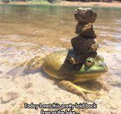 Frog Balance