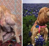 Rescue Dogs Before And After (22 Pics)