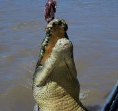 Meet Brutus The Giant Croc (7 pics)