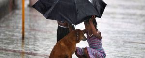 Heartwarming and Awesome Random Acts of Kindness ~ Animal Edition