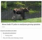 Canada's new police force?