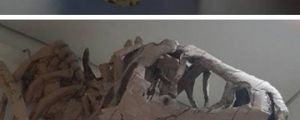 Incredible Cardboard Creatures
