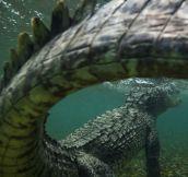 Croc Tail Killer Shot