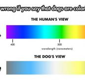 The Truth About The Dog's View