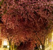 A Pretty Street In Bonn, Germany