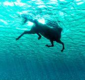 Seahorse, Photo By Kurt Arrigo