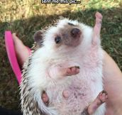 An Even More Enthusiastic Hedgehog