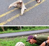 Why Did The Sloth Cross The Road?
