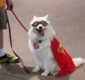 A Good Old Superdog Costume