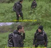 Bear Grylls On Ferns