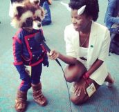 The Coolest Rocket Raccoon Cosplay