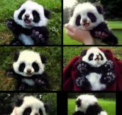 Baby Panda Stuffed Toy