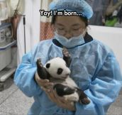 Baby Panda Is Happy