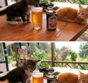 Human, You Drink This Stuff?