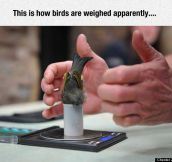 How Zoologists Weigh Tiny Birds