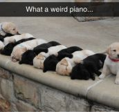 The Keys Are Alive, With The Sound Of Puppies