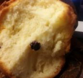 One Blueberry Muffin