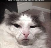 Aging My Cat