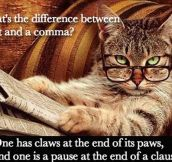 Differences Between A Cat And A Comma