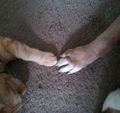 Pet Love Story
