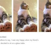 Cats Are Jerks From Every Angle