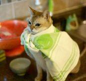 Supercat Is Ready