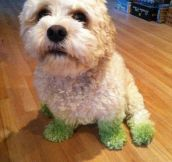The After Effects Of Grass Cutting