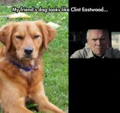 Clint Eastwood Dog
