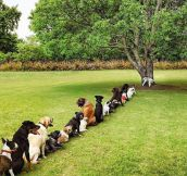 Deforestation Is Taking A Toll On The Dog Community