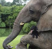 Elephant's Best Friend