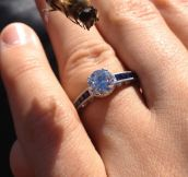 This Bee Has A Thing For Engagement Rings
