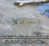 Rise Of The Planet Of The Fish