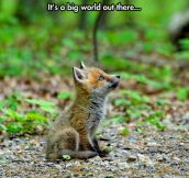 Baby Fox Is Fascinated