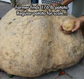 A Giant Potato