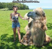 Camels Are Huge
