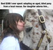 Old Pony Goes To A Good Home