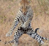 He's Got Them Moves Like Jaguar