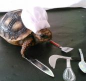 Little Slow Cooker