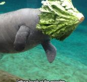 The Master Of Undersea Camouflage